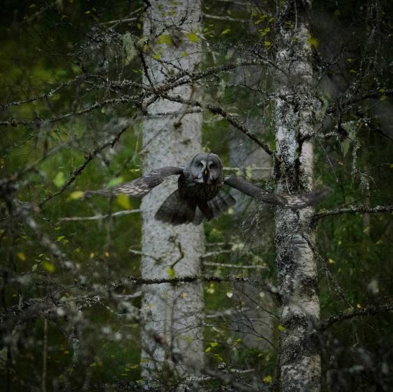 Foto Fredrik Jansson