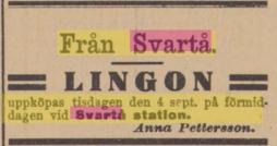 19060901