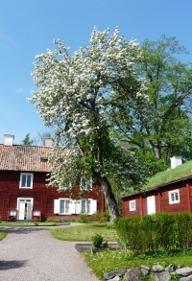 Linnaeus estate Hammarby