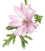 Blomvirvel, detalj