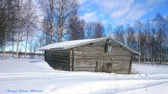 """Välbevarad, """"havad"""" lada på Stråkanäsgrynnan nedanför byn i Kalix älv, mars 2016"""