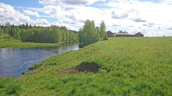 Vi ser Sangisälven vid Taiapale den 14 juni 2016. Nygården i fonden. Andra gårdar är Frammagården och Ipigården.
