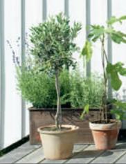 Medelhavskänsla Foto: Magnolia Design & inredning
