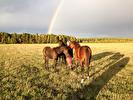 Regnbåge o hästar085