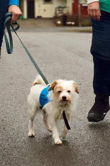 Fidde, social/terapihund för personer med SOL eller LSS-beslut.