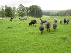 The sheeps help to open up the environment.