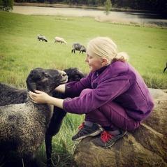 The sheeps will follow your ride. Photo: Anna Åxman.