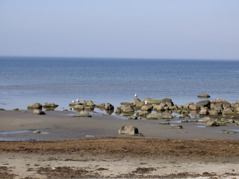 The last day you cycle along the coast between Falkenberg and Varberg.