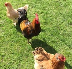 Välkomstkommittén, som också bjuder på fäska ägg till frukosten dagen efter, dag 2.
