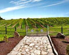Första natten bor du på unikt gårdshotell med bl a en egen vingård! En storsatsning med hela 15 000 vinstockar!