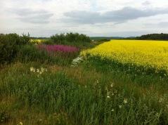 Dag 1 och 2 bjuder på landsbygdens lugnare tempo. Du passerar gårdar, skogar och sjöar.