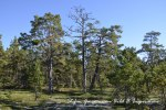 Mesarnas skogHEM