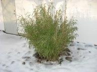 Fröet - ordet kan grönska i frusen mark.
