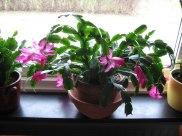 Kaktusen firar livet i fastan