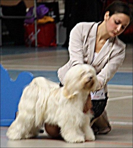 Tibethund 2011.10.01
