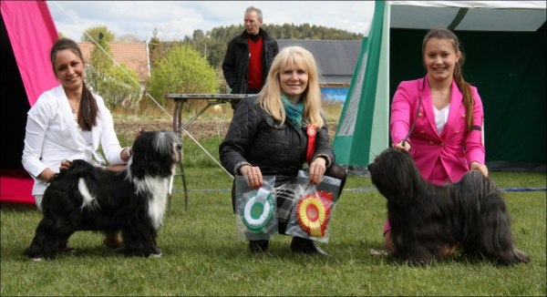 "Fabulous Teddy's Heartbreaker ""Batman"" ( BOS ) & ( BOB ) NORD CH NordJW-10 NordW-10 Falamandus Out To Kick You ""Kicki"" with owner and handler Maria Brunell"