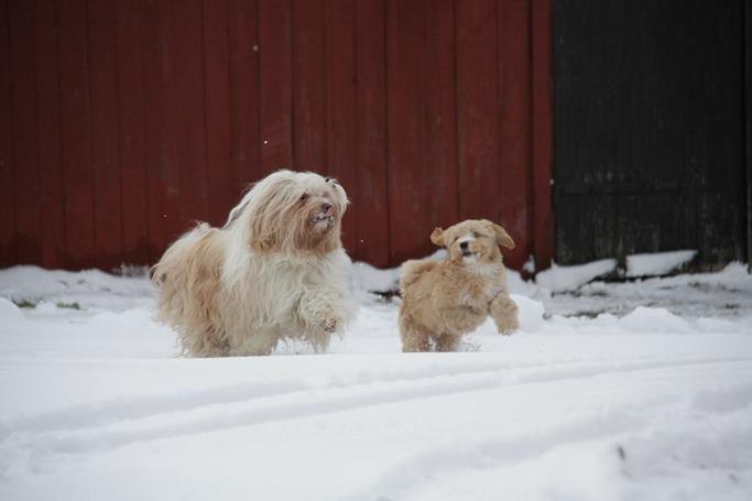 Tyris med barnbarnet Elsa