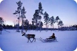 冬季斯德哥尔摩与北部原野休闲游