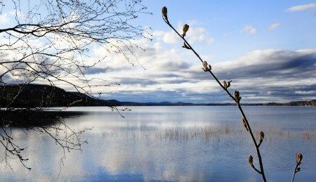 Buddbyträsket Svartbjörnsbyn Norrbotten