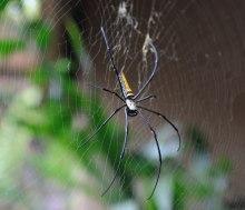 Farlig spindel