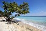 Träd och hav i skön blandning