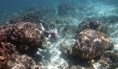Fredrik bland korallerna