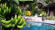 Bananodling på hotellet