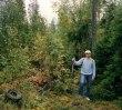 Skogspromenad i golvkepsen
