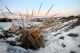 Vinterklitter i morgonljus