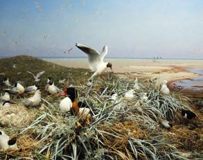 fågelliv vid strandkanten