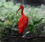 röd fågel...
