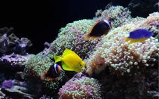 gul fisk...