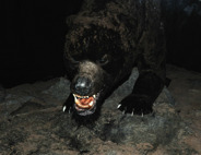 asfarlig grottbjörn...