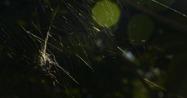 den är väldigt vacker när den sitter i sitt nät...
