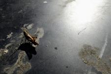 gräshoppa på het plåttak...