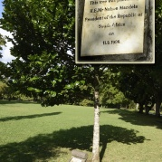 Nelson Mandelas träd...