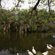 fantastiska fåglar som lever vid djungelfloden...