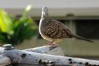 nosens morgonfågel i sin fulla prakt...