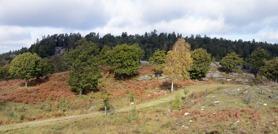 skogsvägen...