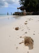 tunga spår i sanden, har nosen gått upp i vikt månde...