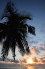 palm typ...