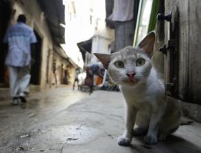 Mäster katten i Stone Town...
