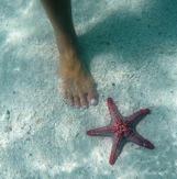 trampa inte på sjöstjärnorna, det betyder otur på Zanzibar...