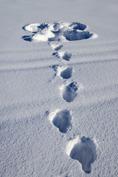 snöängel på Stor Avan...