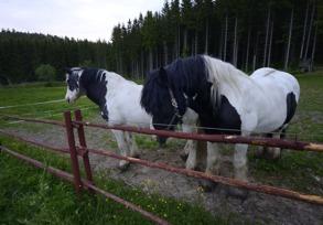 hästar såklart...