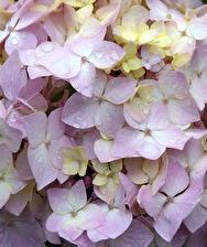 regntunga blommor...