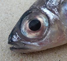 """""""fisheye""""..."""