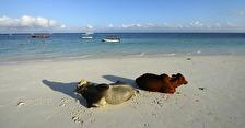 varje morgon kommer dom ner till beachen...