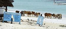 "Zanzibar i ett ""nötskal""..."