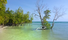 mangroveträsket...